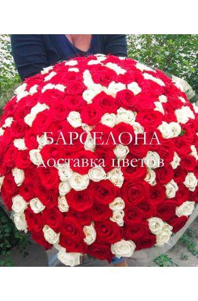 201 красно-белая роза 60 см.