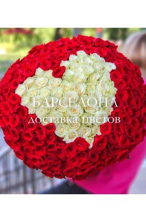 201 красно-белая роза в форме сердца