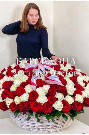 201 красно-белая роза в корзине