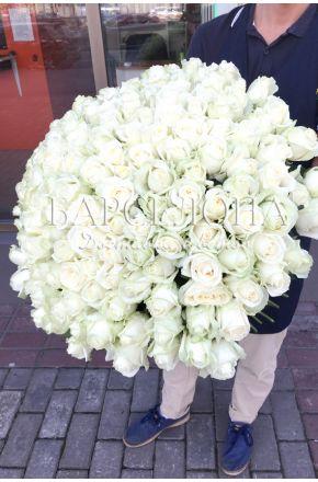 151 Белая роза 60 cм.