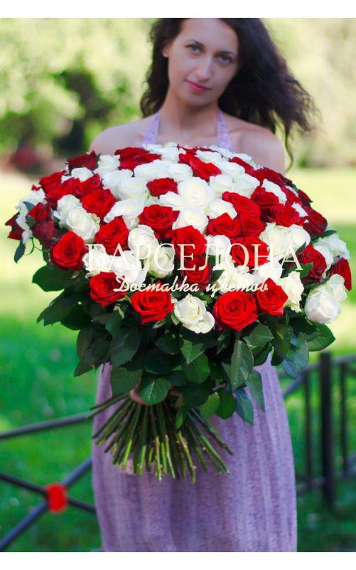 101 Красно-белая роза 50 см.