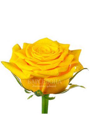 Желтая роза 60 см. оптом
