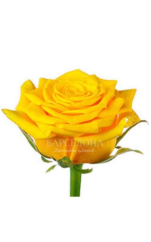 Желтая роза 60 см.