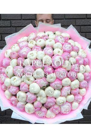 Букет из 101 белого и розового пиона