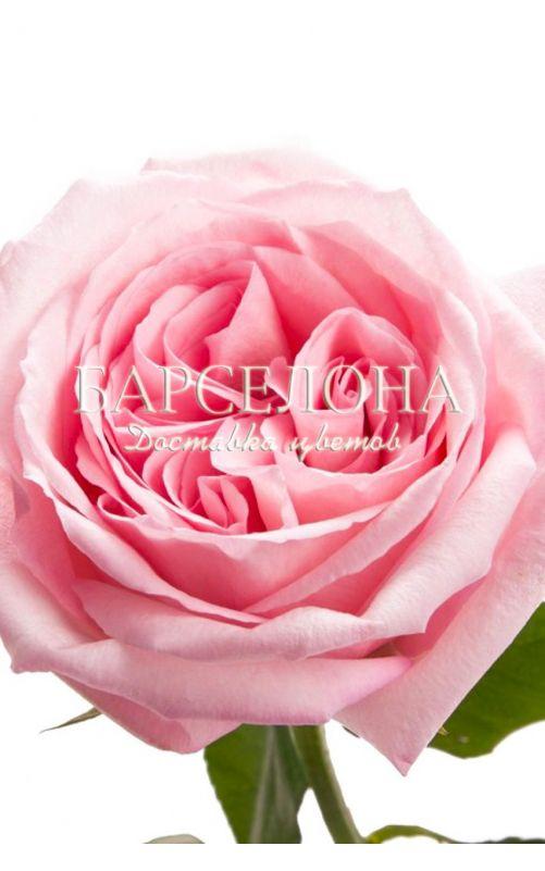 Букет из 11 пионовидных роз Пинк О'Хара