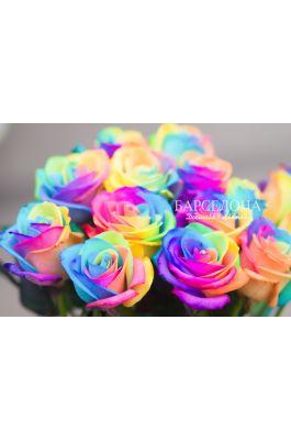 Радужная роза оптом