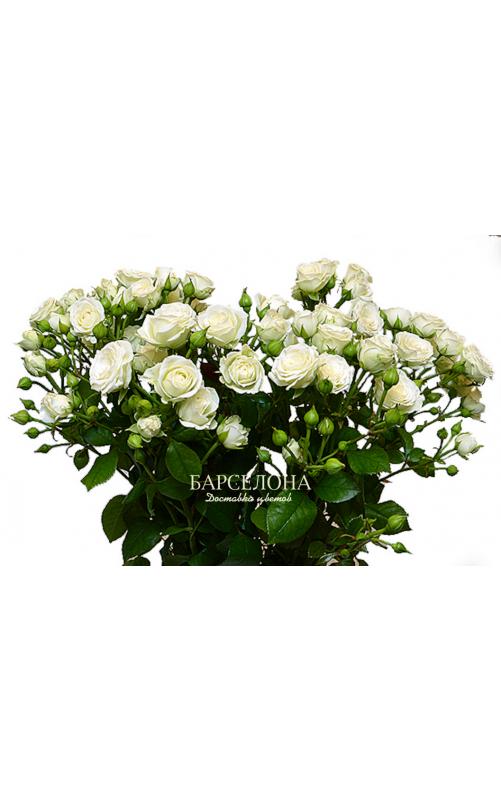 Кустовая роза белая