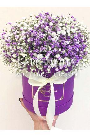 Белая и фиолетовая гисофила в шляпной коробке mini