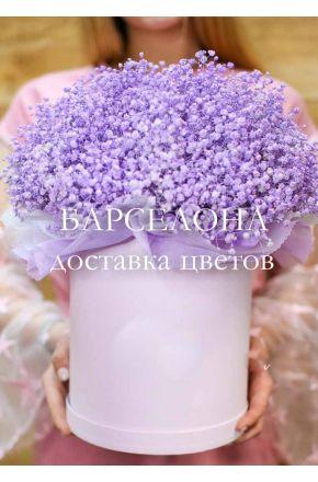 Фиолетовая гисофила в белой коробке XL