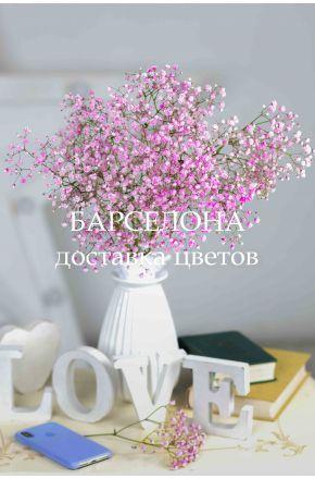 Гипсофила розовая сухоцветы