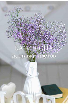 Гипсофила фиолетовая сухоцветы