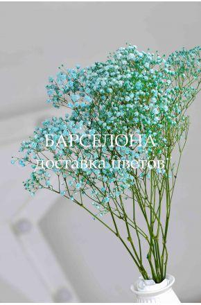 Гипсофила голубая сухоцветы
