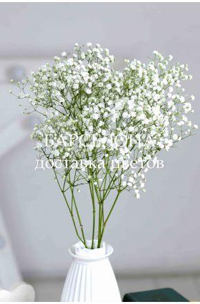 Гипсофила белая сухоцветы