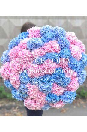 Букет из 25 розовых и голубых гортензий
