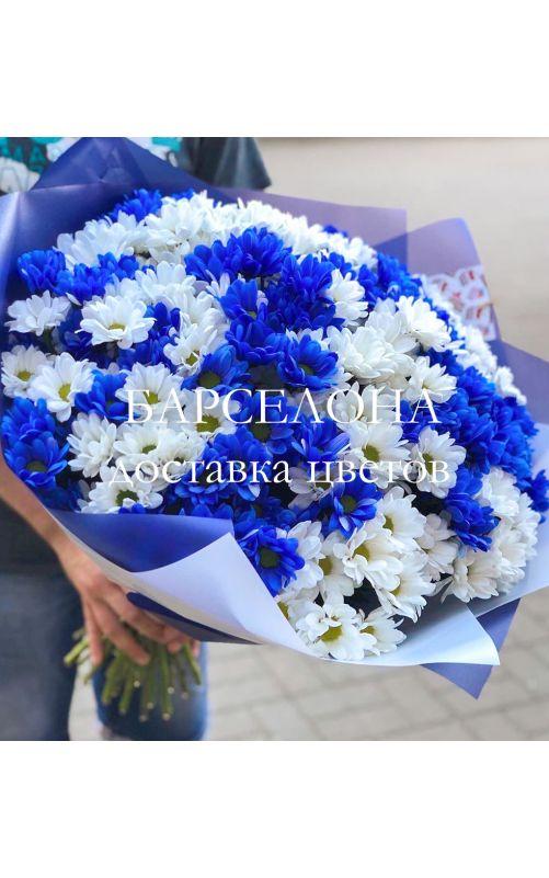 Букет из 25 синих и белых хризантемы