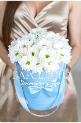 5 белых хризантем в бирюзовой шляпной коробке