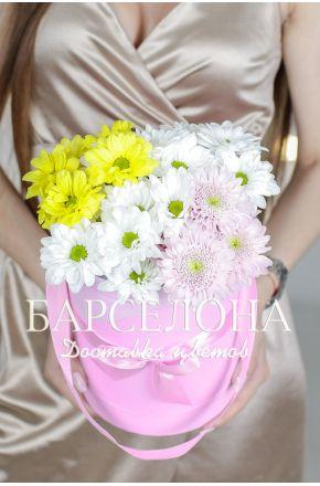 5 разноцветных хризантем в розовой шляпной коробке