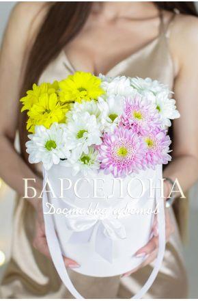 5 разноцветных хризантем в белой шляпной коробке
