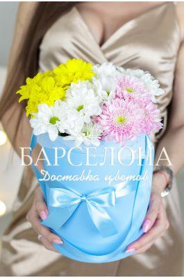 5 разноцветных хризантем в шляпной коробке