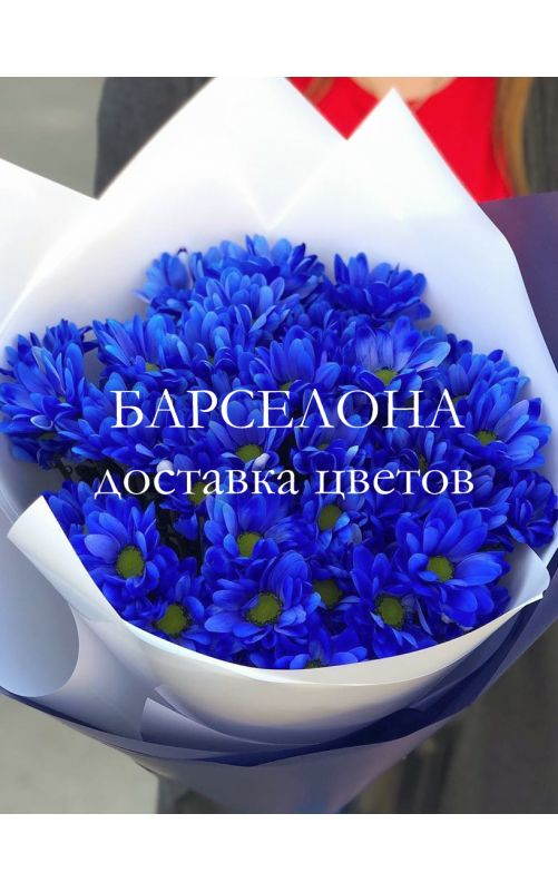Букет из 5 синих хризантем