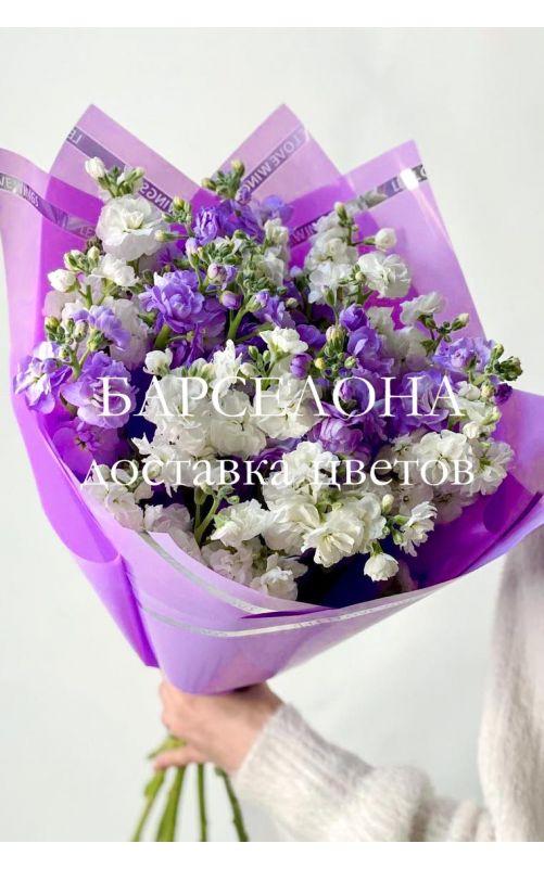 Букет из 19 фиолетовых и белых маттиол