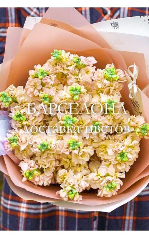 Букет из 19 кремовых маттиол