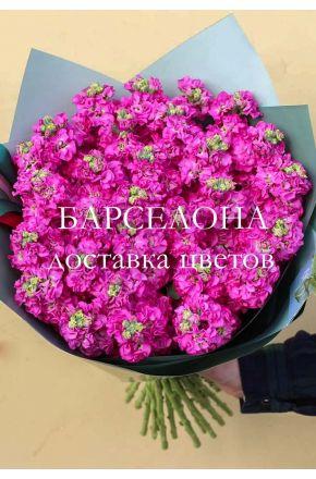 Букет из 29 розовых маттиол
