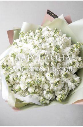 Букет из 49 белых маттиол
