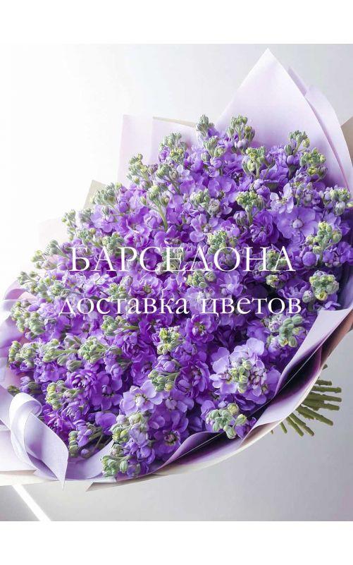 Букет из 49 фиолетовых маттиол