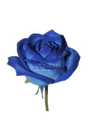 Синяя роза оптом