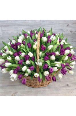 101 белый и фиолетовый тюльпан в корзине
